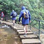 Blue Mountains Bushwalking Excursion