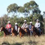 Horse Sydney Trial Riding